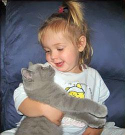 британский котенок с ребенком
