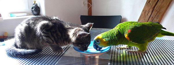 котенок с попугаем