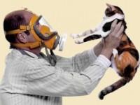 Появилась аллергия на британских кошек?