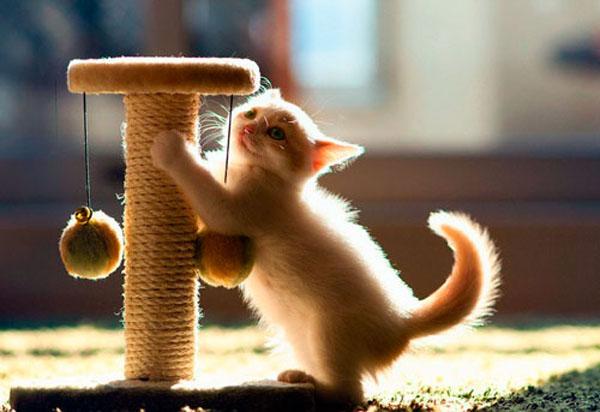 когтеточка для котенка