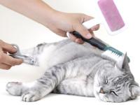 Как ухаживать за шерстью британской кошки?
