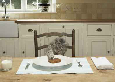 британский кот ест мясо
