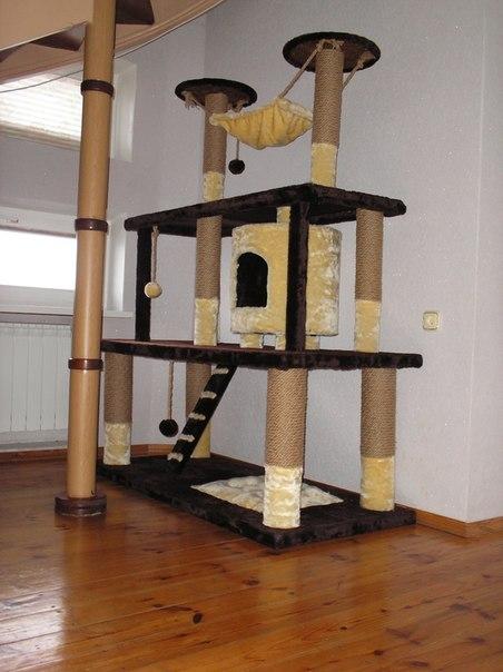 домик для британской кошки