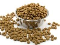 Как нужно правильно кормить британскую кошку?