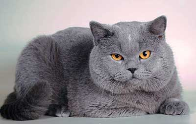 graycat[1]